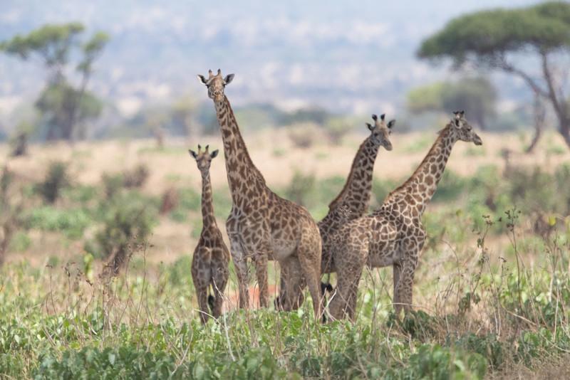 Africa - 102116 - 8250-2.jpg
