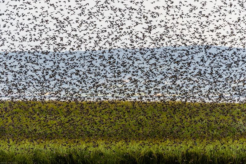 Nezider Bird experience (120 of 173).jpg