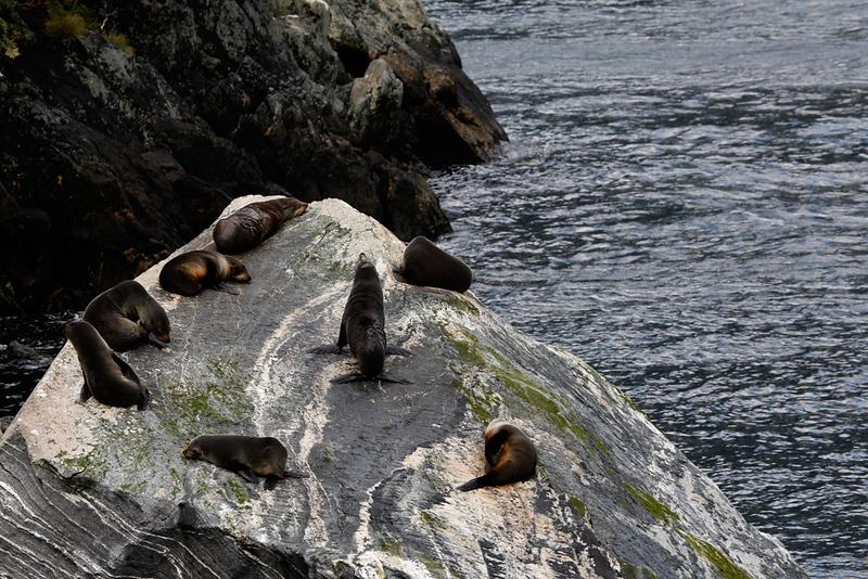 Fur Seals.jpg