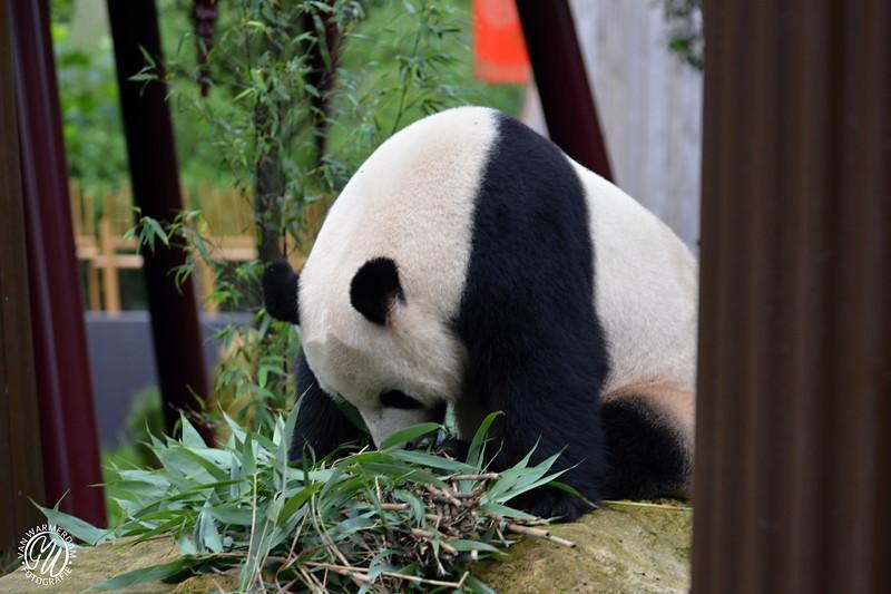 20180909 Ouwehands dierenpark GVW_8639.jpg