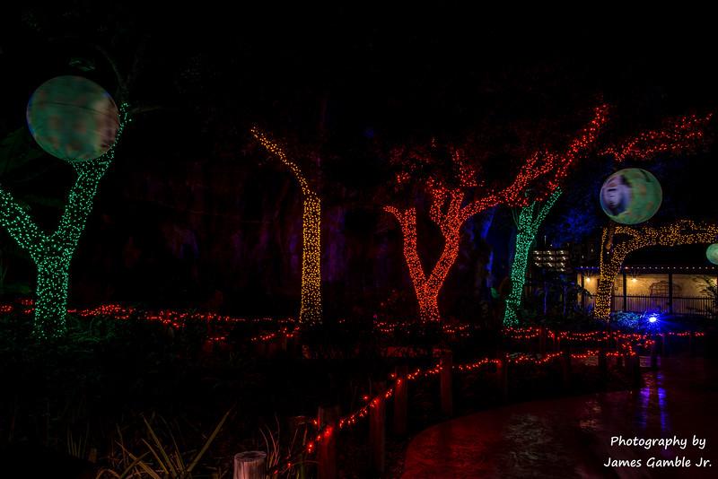 Houston-Zoo-Lights-3096.jpg