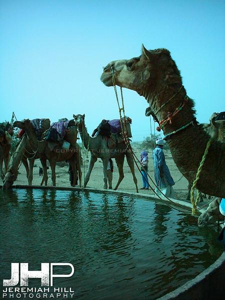"""Thar Oasis"", Thar Desert, Rajasthan, India, 2005 Print INDIA9B-45"