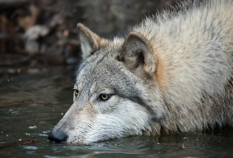 Seacrest Wolves_-11.jpg