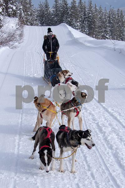 dog sled 21.jpg