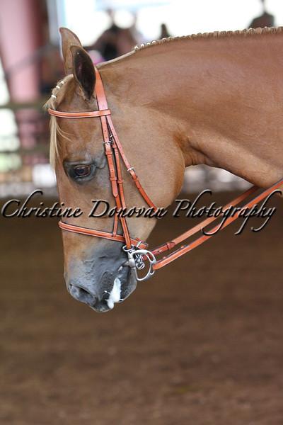 Novice Youth Hunter Under Saddle