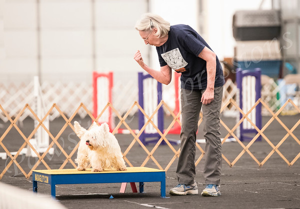 AKC Agility Trial All Open Classes Sat 4 28 18 at CCSC