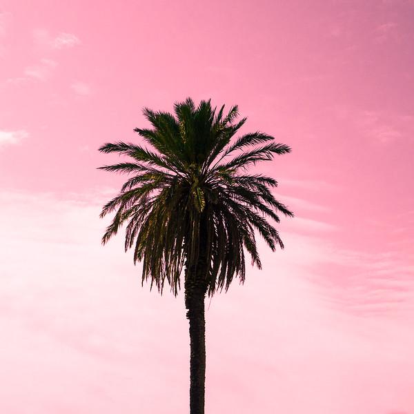 Palm Pink Sky I