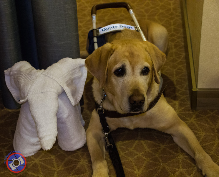 Otto Posing with One of the Towel Creatures Created Nightly by the Cabin Stewards Aboard the Westerdam (©simon@myeclecticimages.com)