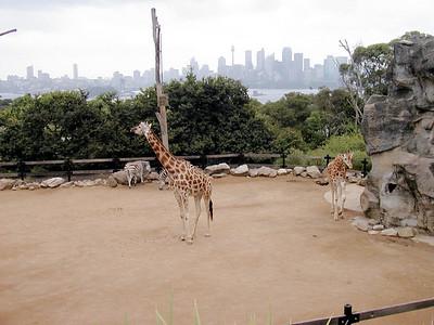 Return to Sydney 4 - Taronga Zoo