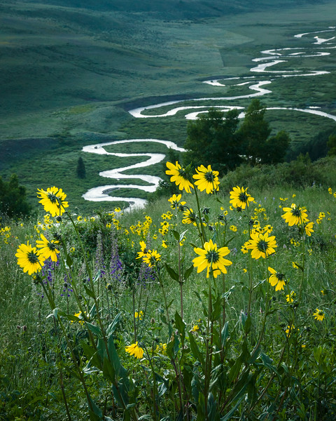 Summer in Crested Butte, Colorado