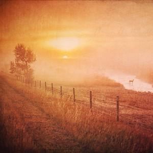 iPhone - Montana Fall 2014