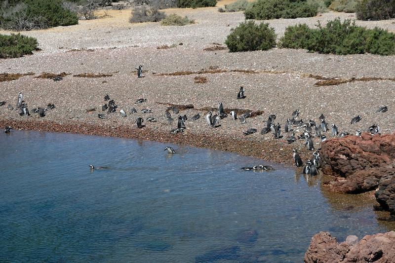 Baywatch Penguins