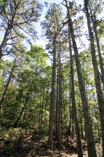 20160918-Ponca Arkansas - Hideout Hollow Trail-4.jpg