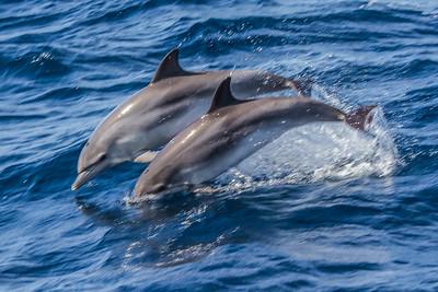 Whales - Hvaler