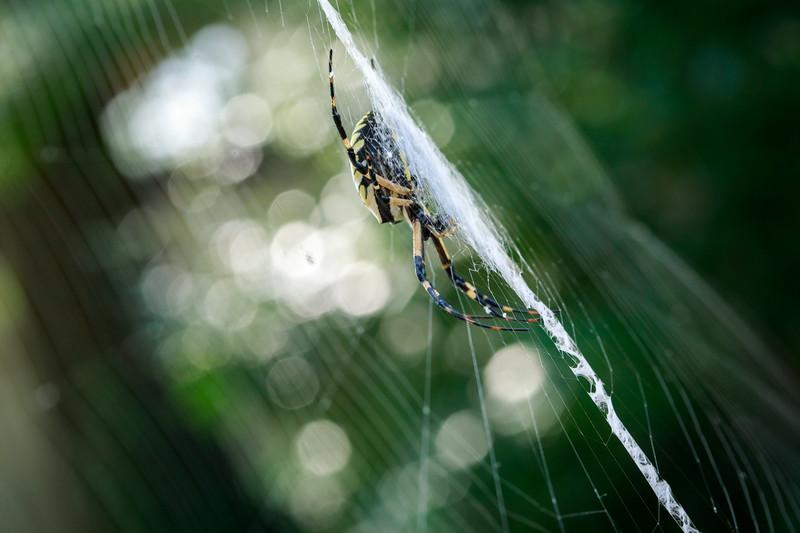 20180907 014 giant spider.jpg