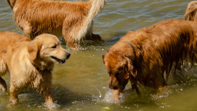 PuppyParty18-167.jpg