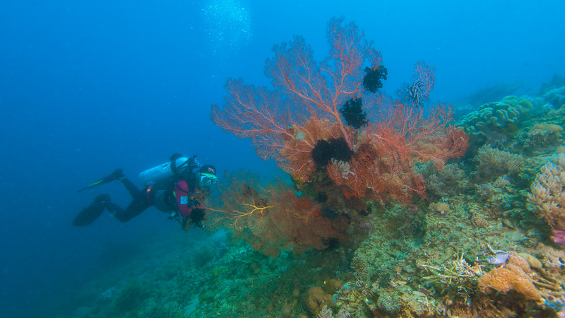Taken at Tahua divesite in Tidore Island, North Maluku, Indonesia during our 8D7N excursion in March 2018
