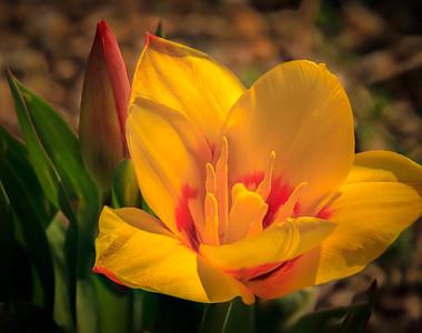 04 April Flowers