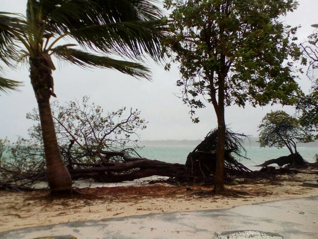 . A tree lays on the shore of Sainte-Anne on the French Caribbean island of Guadeloupe, early Tuesday, Sept. 19, 2017, after the passing of Hurricane Maria. (AP Photo/Dominique Chomereau-Lamotte)