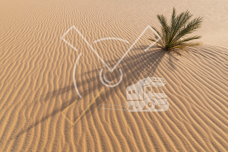 Small palm tree growing in the desert sand with a beautiful abstract background surrounding op ripples in the sand at sunrise