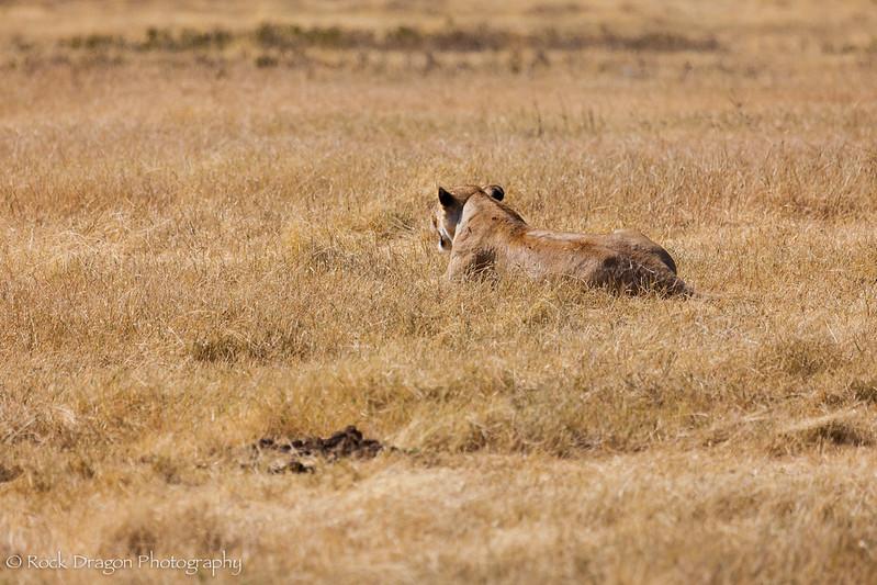 Ngorongoro-15.jpg