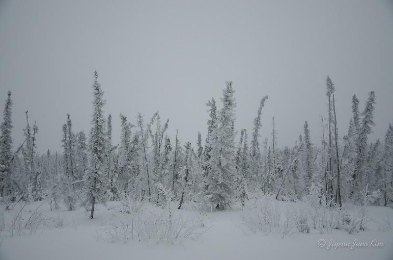 USA-Alaska-arctic-circle-2454.jpg