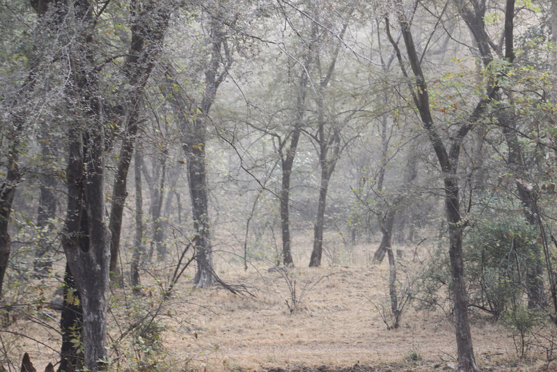 India 2013 2014 091.JPG