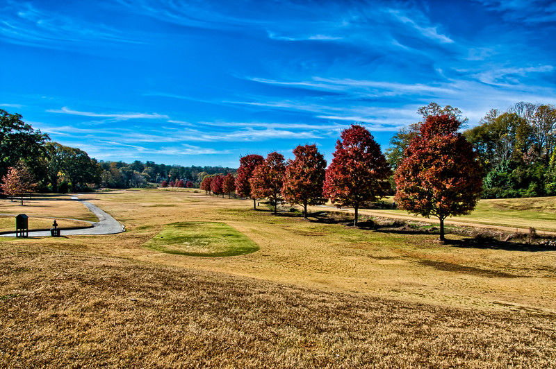 October Glory Maple Trees on North Fulton Golf Course