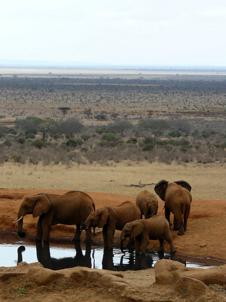 Elephants Watering Hole Tsavo East 2.jpg