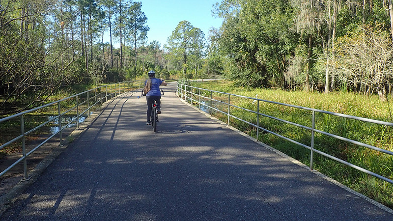 Cyclist on causeway over swamp
