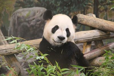 Toronto Zoo (June 2013)