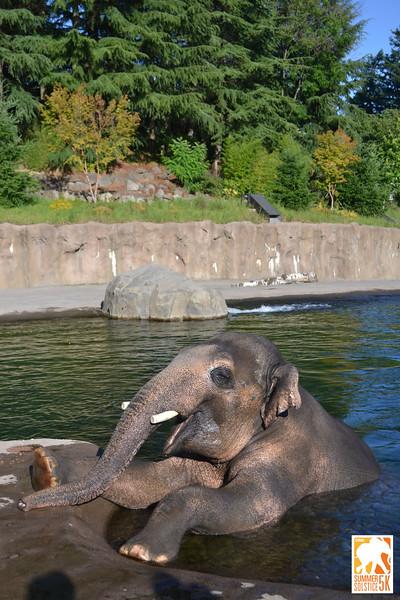 Anzelina-Coodey_Solstice-Run-Oregon-Zoo_007.jpg