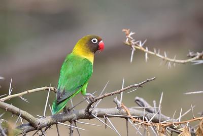 4.- TANZANIA - BIRDS
