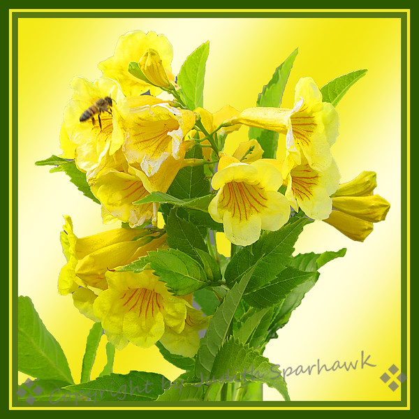 Yellow! - Juith Sparhawk