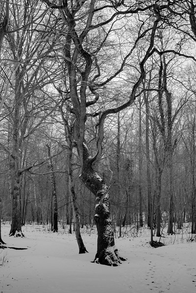 Tree_2669.jpg
