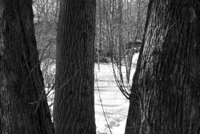 Flat Rock Brook Forest Preserve