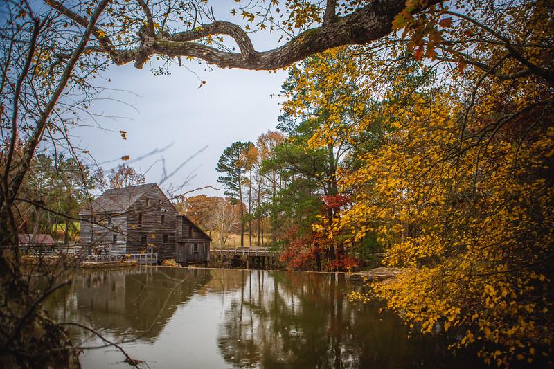 FallFoliage-46.jpg