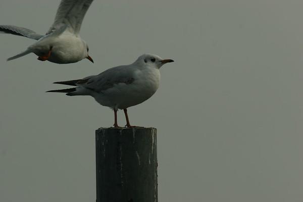 Birds on the Zurichsee