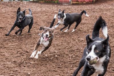 Jasper's Dog Park, Feb 27, 2015