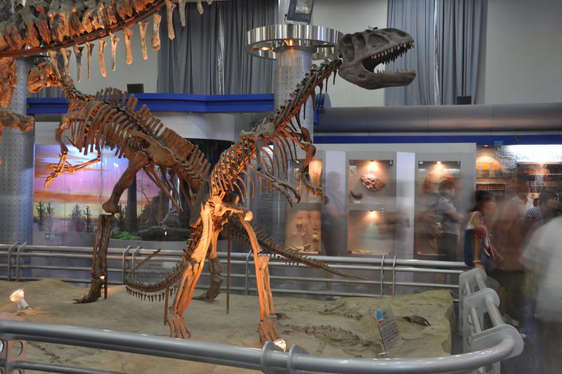 "The understudied, basal theropod (""megalosaur"") Gasosaurus."