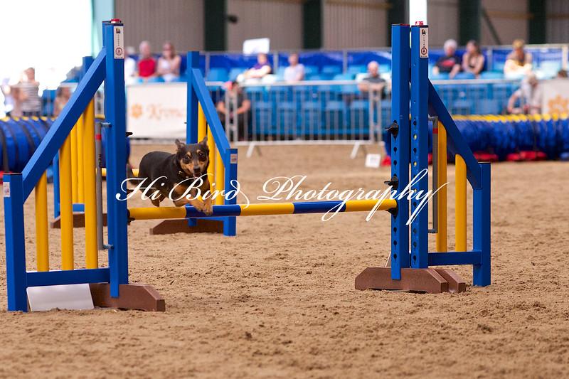 small jump class 1077.jpg