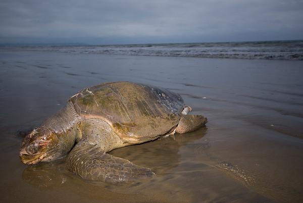 Sea Turtles Unseen