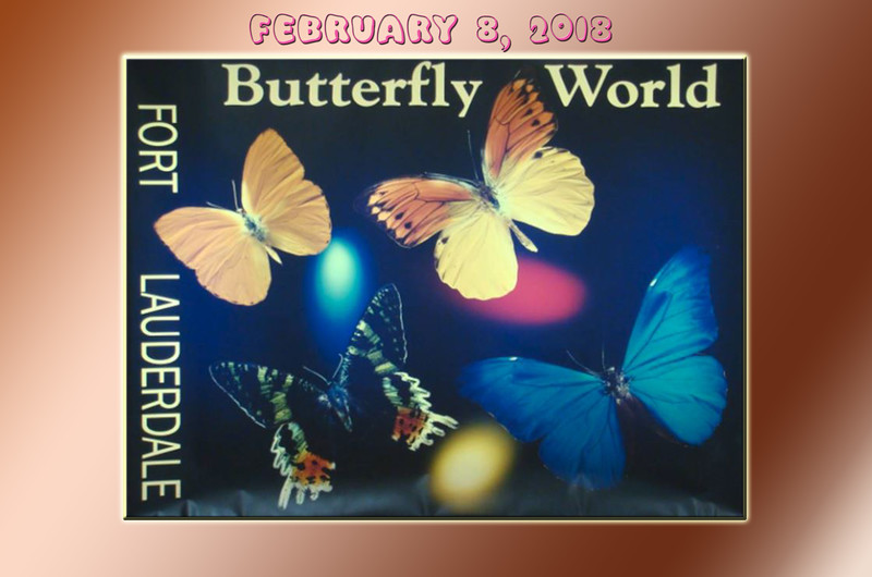 Butterfly World - February 8, 2018