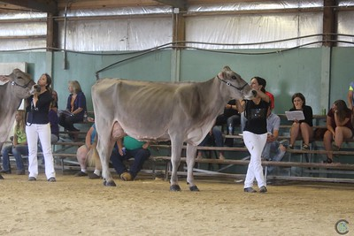 WI State Brown Swiss Show 2017 Senior Cows