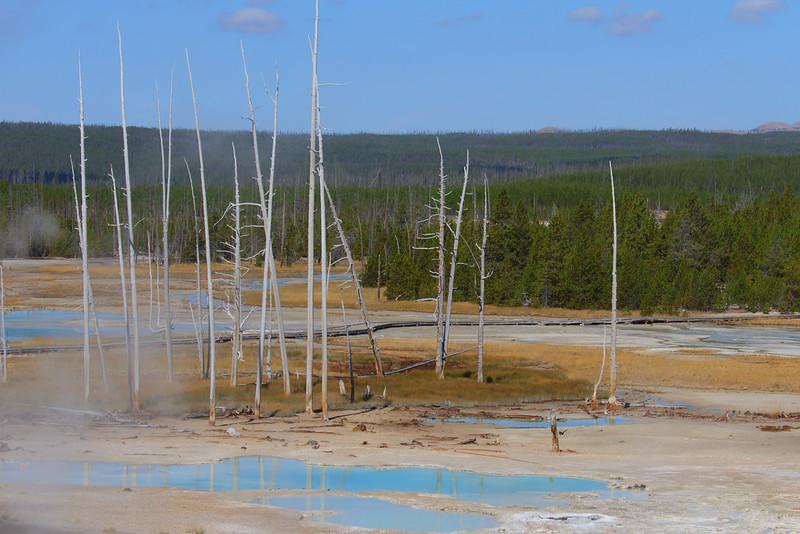 Yellowstone 054.JPG