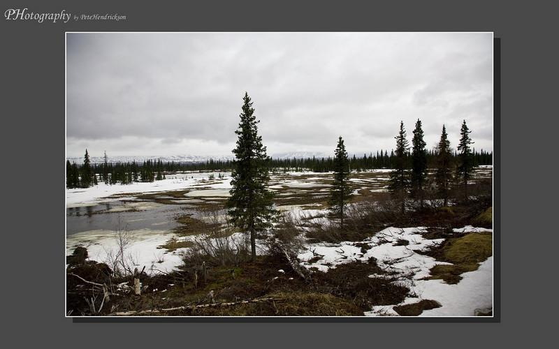 My Alaska 12-08-054.jpg