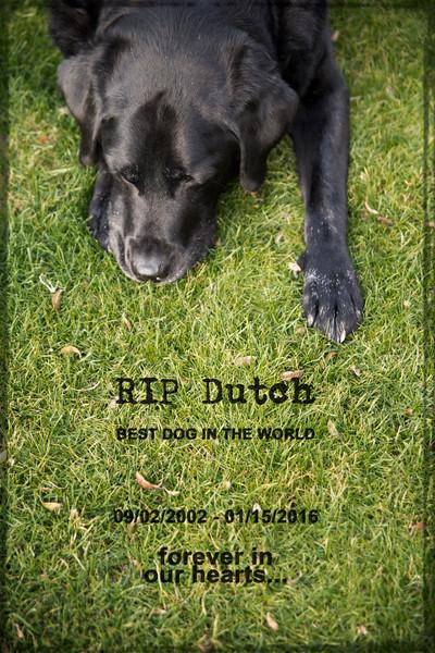 RIP Dutch.jpg