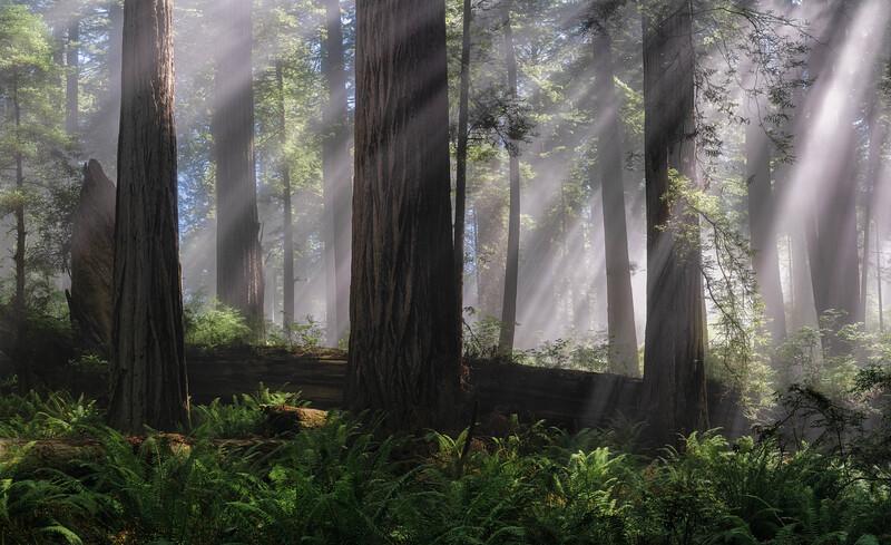 Redwoods Lightrays2 3.jpg