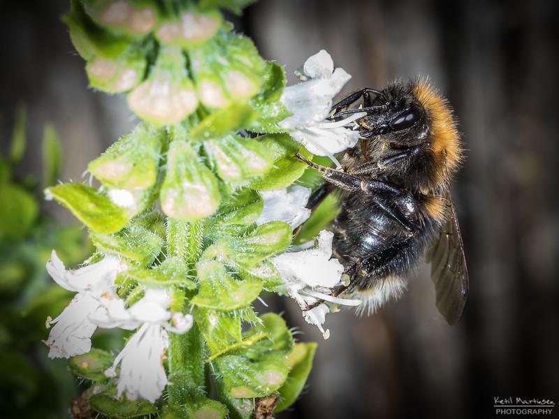 2018-07-13 Blomster og bier-11.jpg