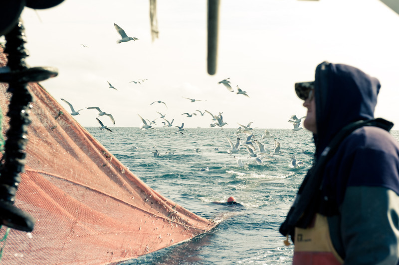 16. Shrimping with Proctor Wells, Gulf of Maine, February 2013.